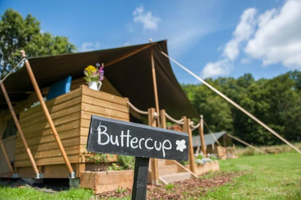 Buttercup SAfari Tent.jpg