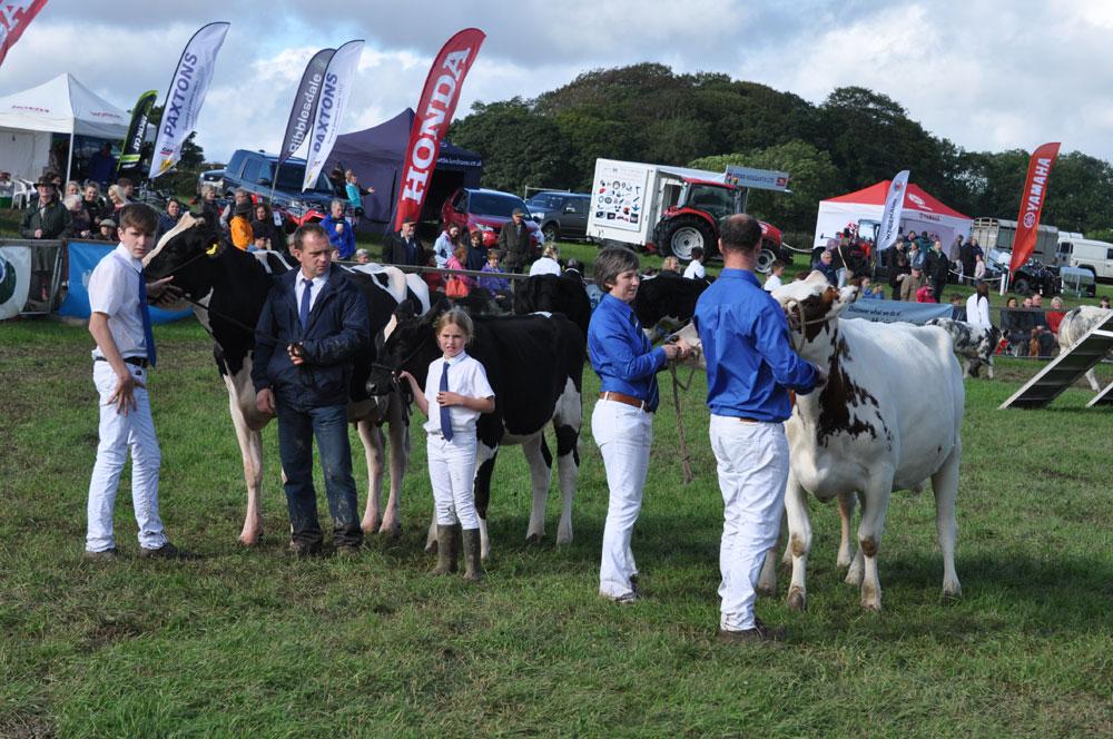 Hodder-Valley-Cattle-Class
