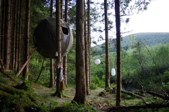 The Red Kite Tree Tent, Powys