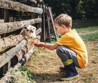 Boy at farm