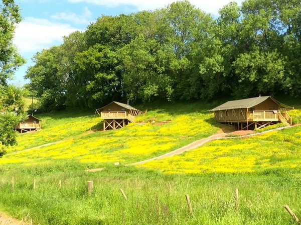 Field with glamping tents