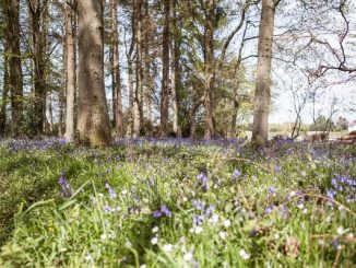 Woods with bluebells
