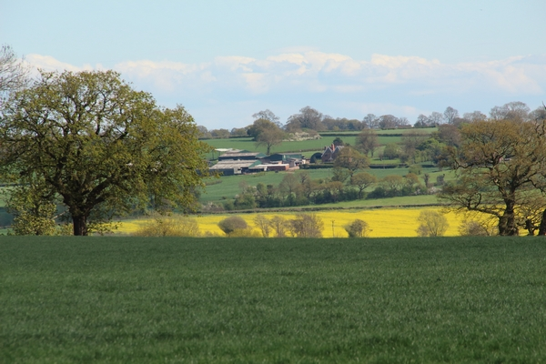 Fields of countryside