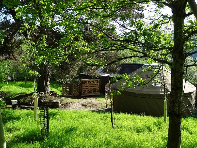Camping yurts and tree