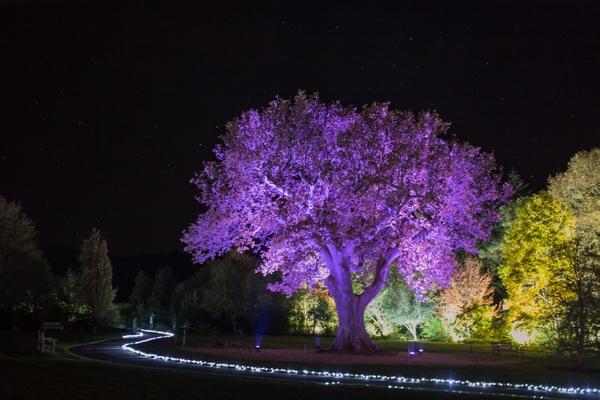 Rosemore's Glow