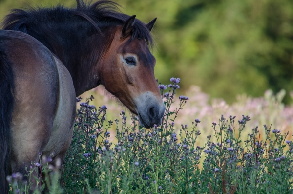 Horse grazing in a field with flowers