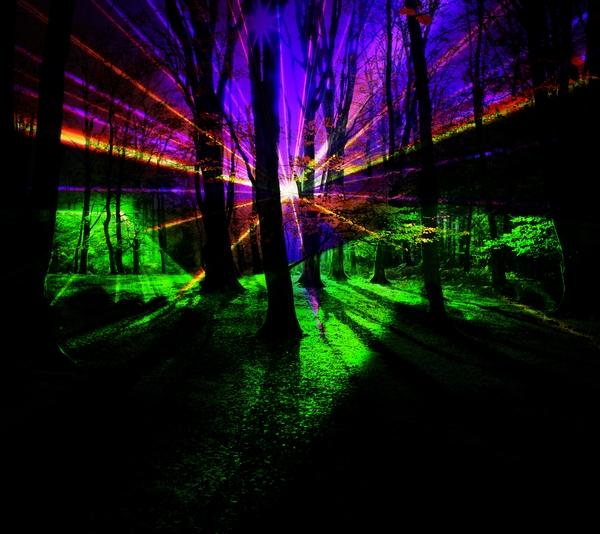 Lights shining through beech trees