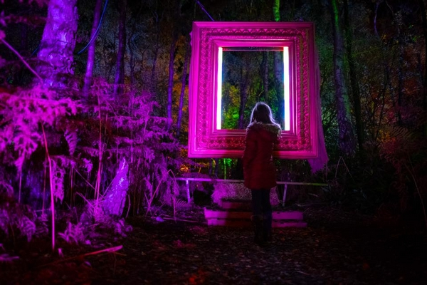 Christmas woodland lit up pink at night