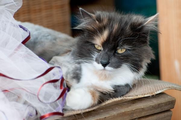 ecoYoga's resident cat