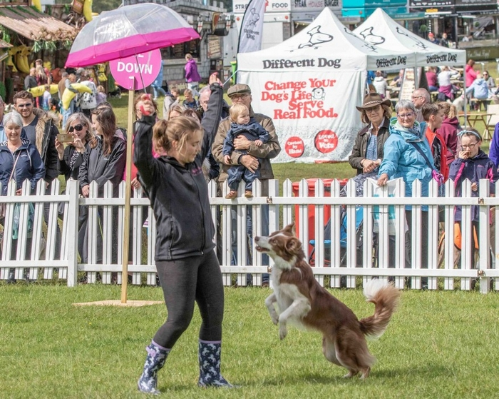Dog and owner performing at Dogfest