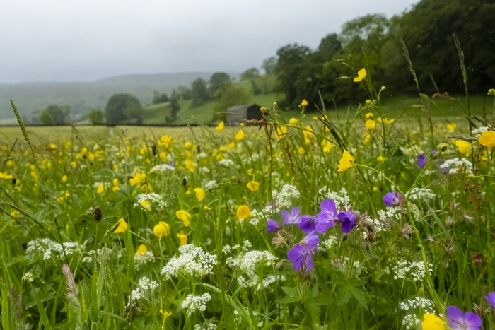 Field of flowers under conservation