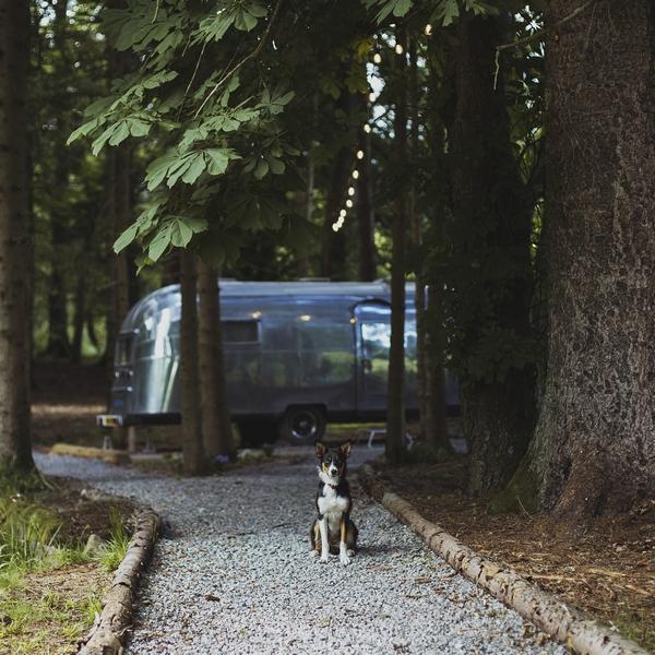 Dog sat on path at Gladstone estate