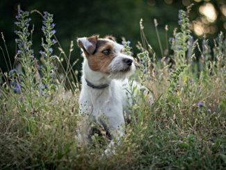 Dog at Swallowfield Glamping Retreat