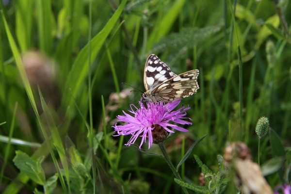 Swallowfield Glamping Retreat butterfly