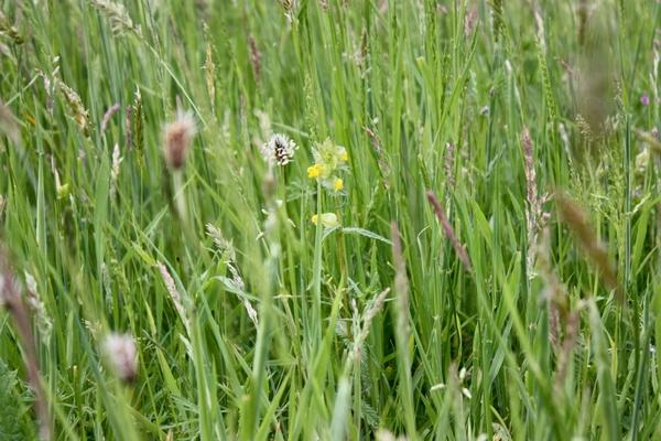 Swallowfield Glamping Retreat hay