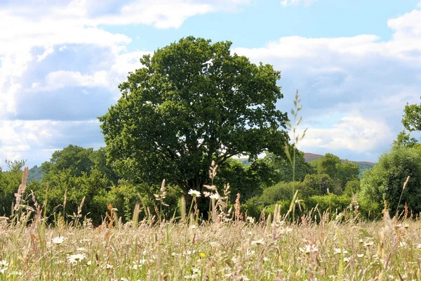 Swallowfield Glamping Retreat tree