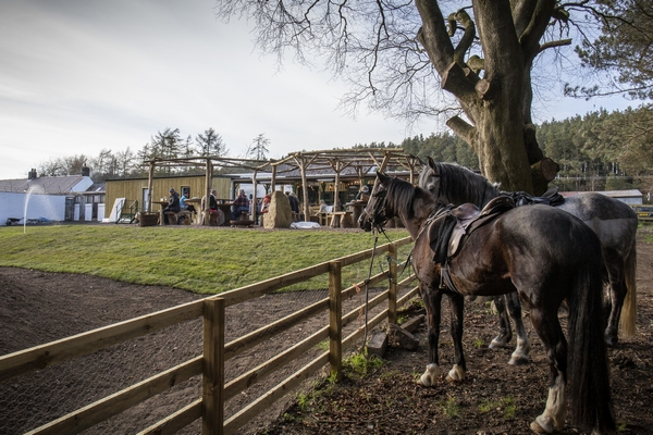 Cheviot Brewery and Glamping horses